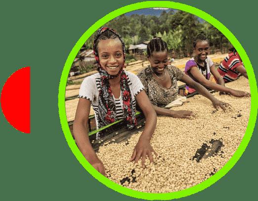 Campesinas de café en Etiopía Sidamo Nansebo